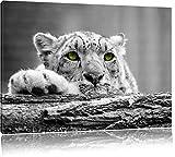 Schöner Gepard mit grünen Augen auf Baumstamm