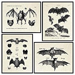 Image: Bats Wall Decor - Vintage Retro Hipster Goth Art, Home or Room Decoration - Gift for Gothic, Horror, Vampire Fans - 8x10 UNFRAMED Creepy Scary Anatomical Picture Poster Print Set