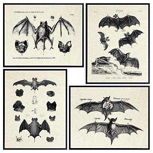 Bats Wall Decor - Vintage Retro Hipster Goth Art, Home or Room Decoration - Gift for Gothic, Horror, Vampire Fans - 8x10 UNFRAMED Creepy Scary Anatomical Picture Poster Print Set