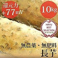 長芋 10kg 自然栽培(無農薬・無肥料)