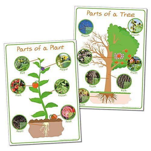 Wildgoose Education SC1110 Delen van een Plant en Boom Poster Set