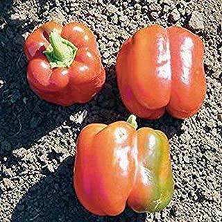 発芽種子:25 - 種子:SP-05から43 F1ハイブリッドピーマンの種 - 非常に厚い壁、緑、赤熟した果実に