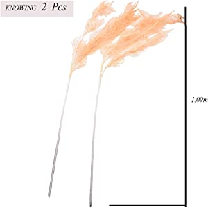 Knowing 2 Pcs Natural Dried Small Pampas Grass, Artificial Flowers Reed Plumes for Flower Arrangements Home Decor(Deep champagne)