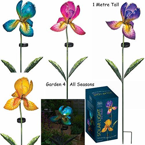 TIGER Lily Fiore Solare Luce Giardino Paletto Creekwood Regal Art /& Gift Boxed