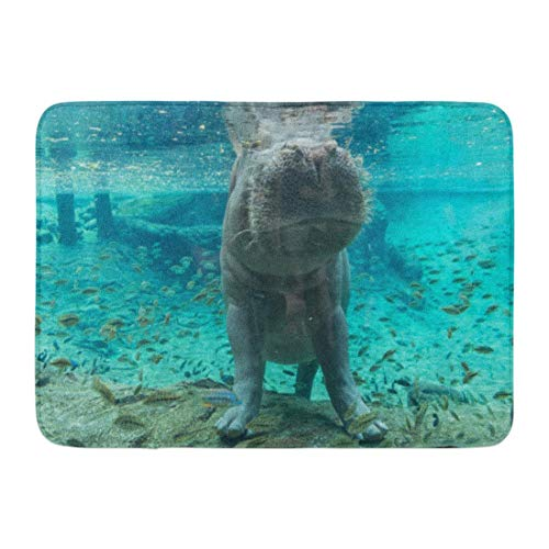 LnimioAOX Doormats Bath Rugs Outdoor/Indoor Door Mat Blue Aquarium Hippopotamus in Tampa Florida Green Busch Garden Wildlife Bathroom Decor Rug Bath Mat