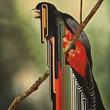 Bird Rib