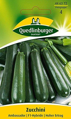 Zucchinisamen - Zucchini Ambassador F1 von Quedlinburger Saatgut