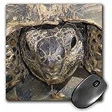 3drose LLC 8x 8x 0.25インチTortoise Portrait動物、IBERA Greek Tortoise Land Turtles、爬虫類、Testudo IBERAパターンマウスパッド(MP 46674_ 1)