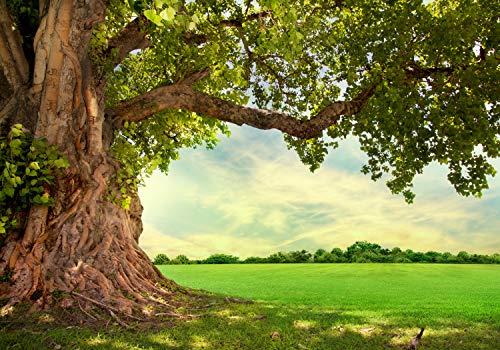 wandmotiv24 Fototapete Baum 3D Frühling XL 350 x 245 cm - 7 Teile Fototapeten, Wandbild, Motivtapeten, Vlies-Tapeten Grün, Wiese, Blätter M0715
