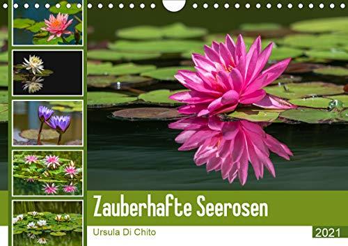 Zauberhafte Seerosen (Wandkalender 2021 DIN A4 quer)