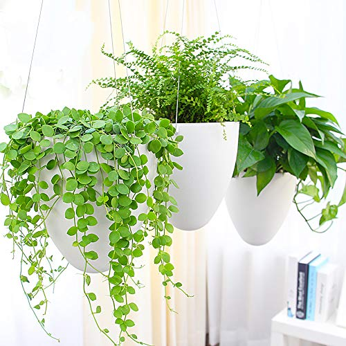 Sungmor Garden Self watering Hanging Planter | 3PC PACK, White | Succulent Flower Pot Air Plant Holder | Unique Eggshell Houseplant Pots | Home Indoor Outdoor Office Decorative Container