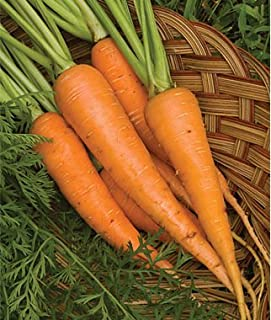 Big Top Carrot 600 Seeds (Non-Gmo) Upc 646263362235 + 2 Plant Markers
