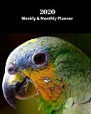 2020 Weekly and Monthly Planner: Parrot Bird - Monthly Calendar with U.S./UK/ Canadian/Christian/Jewish/Muslim Holidays– Calendar in Review/Notes 8 x 10 in. Exotic Birds