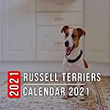 Russell Terriers Calendar 2021: 12-month mini Calendar from Jan 2021 to Dec 2021, Cute Gift Idea For Russell Terriers Lovers Or Owners Men And Women | Pictures in Every Month