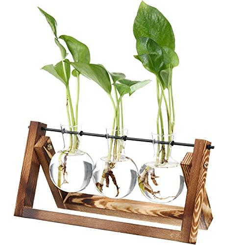 Terrario de Vidrio Transparente para Escritorio Plantador de Vidrio Florero de Bulbo con Soporte de Madera Sólida y Soporte Giratorio de Metal para Plantas Hidropónicas Flores Decorativos