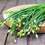 Semillas para plantar, 100 unidades por bolsa de ajo, cebollino semillas comestibles, nutritivas, multifuncionales, condimentos, plantas de cocina para granja - semillas