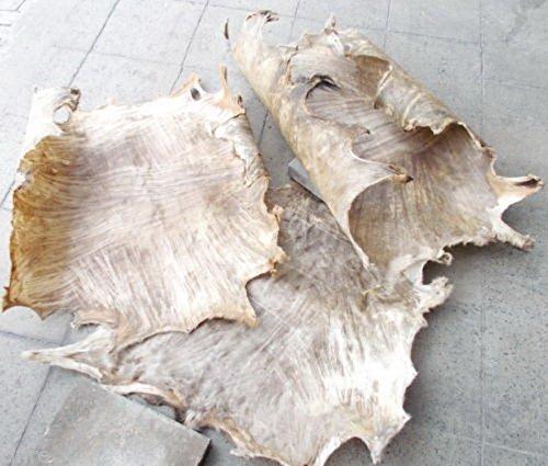 Große Auswahl an Ziegenfell Ghana Afrika Ziegen Fell Rasiert Djembe Drum Bongo (50cm x 50cm)