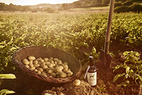 Windspiel Premium Dry Gin 47 % vol. 1 x 0,5 Liter - International ausgezeichneter London Dry Gin aus der deutschen Vulkaneifel - 8