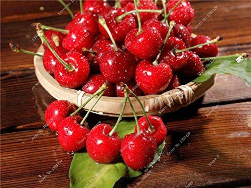 Coloré cerise semences Bonsai extérieur des plantes rares sucré non-OGM Big Fruit Cerise Haute Germination meilleur cadeau pour enfant 30 Pcs 9
