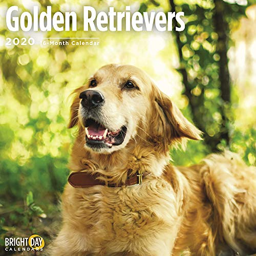 2020 Golden Retrievers Wall Calendar by Bright Day, 16 Month 12 x 12 Inch, Cute Dogs Puppy Animals Goldens Canine
