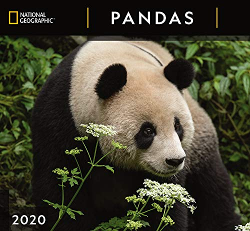 National Geographic Pandas 2020 Wall Calendar