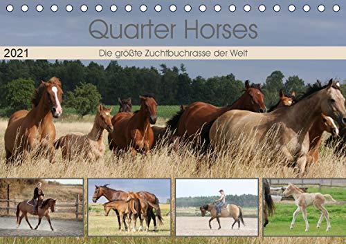 Quarter Horses - Die größte Zuchtbuchrasse der Welt (Tischkalender 2021 DIN A5 quer)