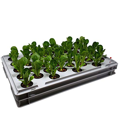 GREEN24 Aqua 36-A Pro Hydroponic Anzucht-System XL 40 x 60 cm Hydrokultur Indoor Pflanzen-Aufzucht für Nutzpflanzen, Gemüse, Kräuter, Salate, Zierpflanzen in Tiefwasserkultur