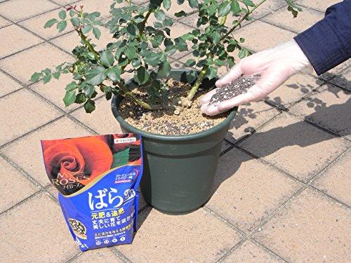 『住友化学園芸 肥料 マイローズ バラの肥料 固形タイプ 1.6kg』の2枚目の画像