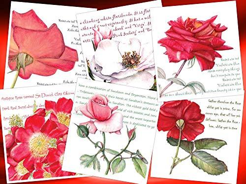 Lot de 6 cartes de vœux florales – Images de roses rouges botaniques avec fond fantaisiste – Intérieur vierge – Carte carrée 140 mm avec 6 enveloppes assorties