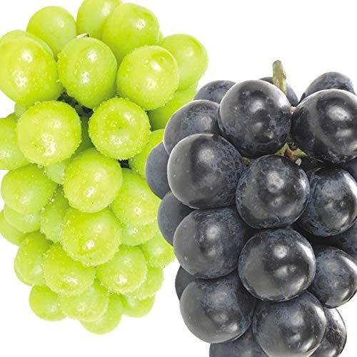 国華園 長野 直送 2大高級葡萄セット 700g