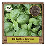 BIO Basilikum Samen großblättriger Genoveser Basilikumsaat (Ocimum basilicum) italienische Kräuter Samen