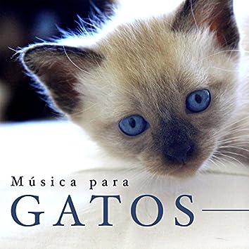 Música para Gatos - Sonidos Relajantes de la Naturaleza