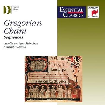 Gregorian Chant - Sequences