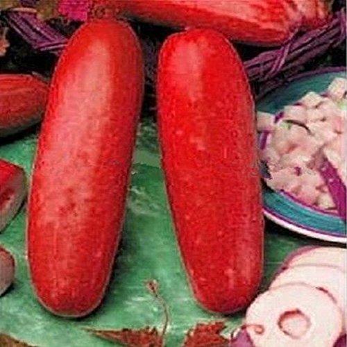 Inovey 30 Pcs Rouge Concombre Graines Fruits Légumes Graines Rare Plante Bonsaï Maison Jardin