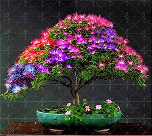 Bloom Green Co. Â 200 pcs/Bolsa Aster Bonsai, Jardãn de Flores de crisantemo Chino para el hogar gaden Planta Alto Brote Fã¡Cil de g: 10