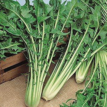 SANHOC Samen-Paket: King Seeds - Artischocke Violetto di Chioggia - 30 SeedsSEED