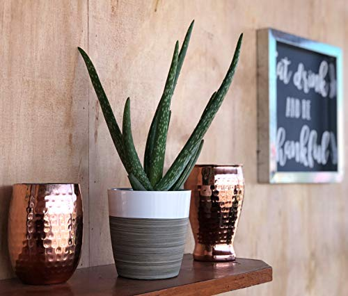 Costa Farms Aloe Vera Live Indoor House Plant, Gift, 10-Inch Tall, Green