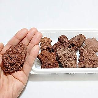 コケのインテリア コケリウム テラリウム コケリウム 石 天然石 天然赤溶岩石SS (形状お任せ、パック詰め)
