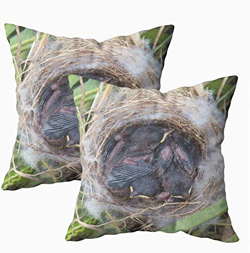 Fundas de almohada de cama, nido abandonado con tres pájaros de bebé de 45 x 45 cm, fundas de almohada para decoración del hogar, fundas de almohada con cremallera para sofá