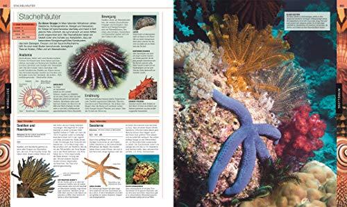 Tiere: Die große Bild-Enzyklopädie mit über 2.000 Arten - 6