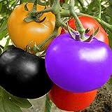 Arcoíris Semillas de Tomate Jardín Orgánico Frutas Semillas de Vegetales Planta Hogar Patio Decoración (100 Piezas)