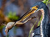 Nikon D500 Nikkor 200-500 - Best Bird/Wildlife Photography Experience To Date