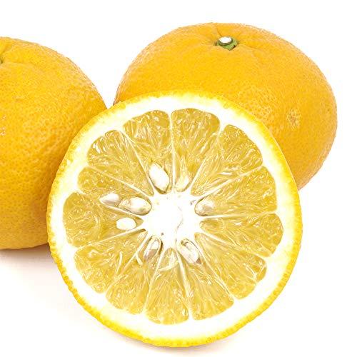 国華園 熊本産 甘夏 10kg 1箱 ご家庭用 M〜2L あまなつ 蜜柑 柑橘 フルーツ 果物 食品