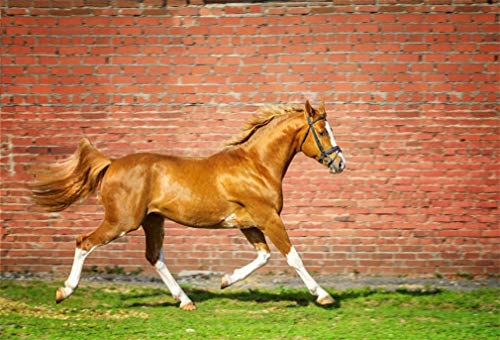 YongFoto 7x5ft Fotografie Achtergrond Natuur Paard Verweerde Rode Baksteen Behang Groen Grassland Natuur Lente Foto Achtergrond Fotografie Video Partij Kinderen Portret Photo Studio Props