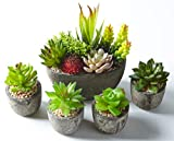 Jobary Set di 5 Piante Artificiali Succulente (Include 10 Piante), Colorate e Decorative F...