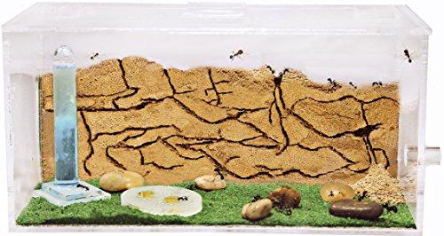 Hormiguero de Arena con Hormigas Gratis (AntHouse.es)