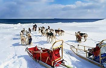 diy dog sled