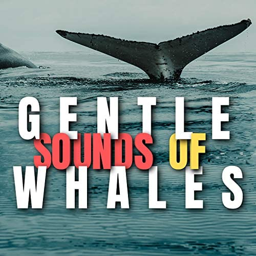 Whale Sounds, Nature Sounds Nature Music & Whale Sounds Relaxation