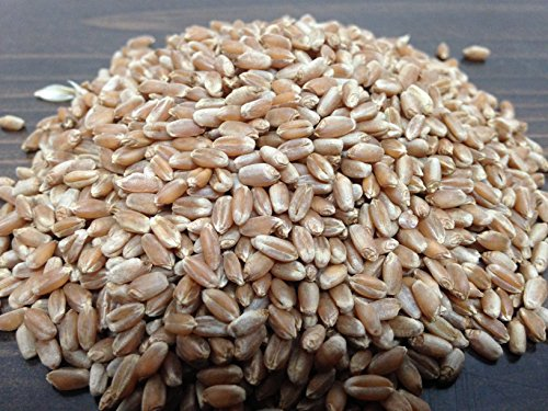Rex Products,INC Non-GMO,Magic Grow Premium Wheatgrass Seed,Hard Red Winter (2 LB) Aproximately 26,000 Seeds