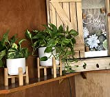 Costa Farms Easy Care Devil's Ivy Golden Pothos Live Indoor Plant, 8-Inches Tall, White Mid-Century Modern Planter